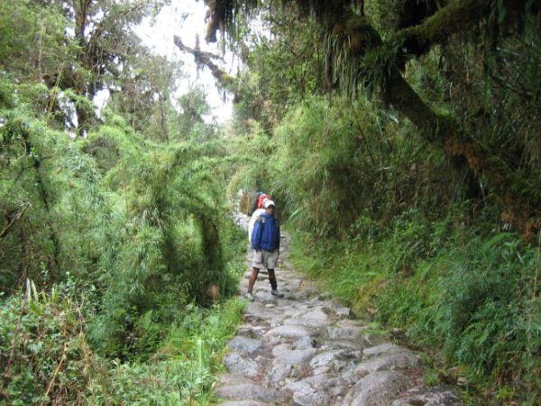 Foto mit dem Inka Trail im Bergnebelwald in den subtropischen Anden.