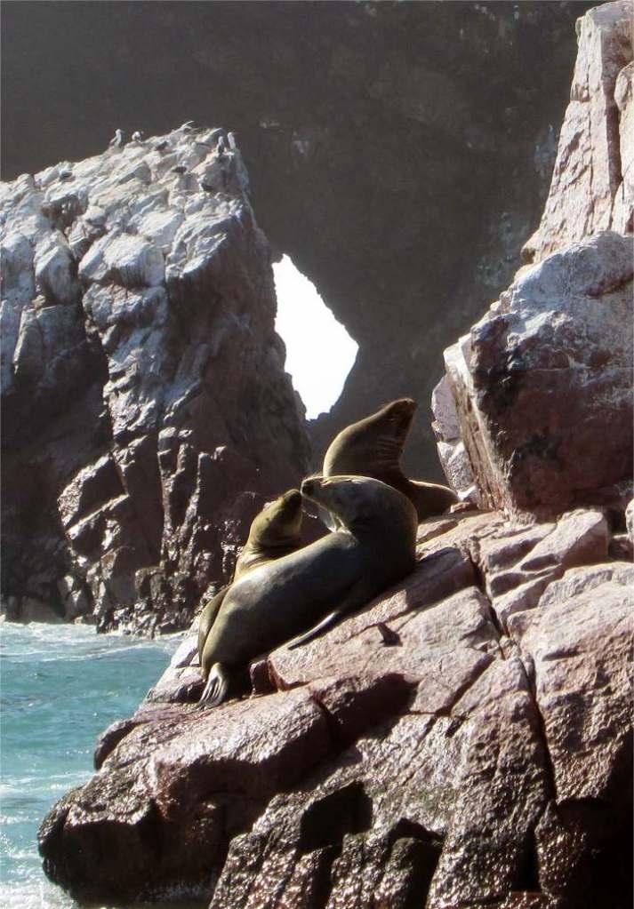 Seelöwen Ballestas Inseln