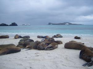 Faszination_Insel_Galapagos-6