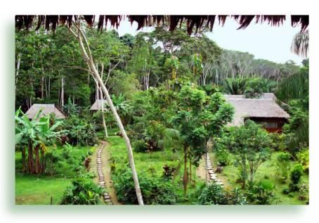 Tambopata Nationalpark   und   Manu Nationalpark:   Zwei beliebte Reiseziele im Amazonastiefland vonPeru.