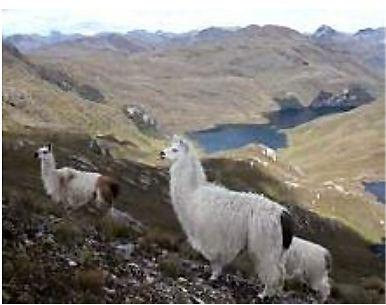Cajas Nationalpark in Equador