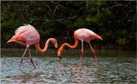 Laguna Flamingos