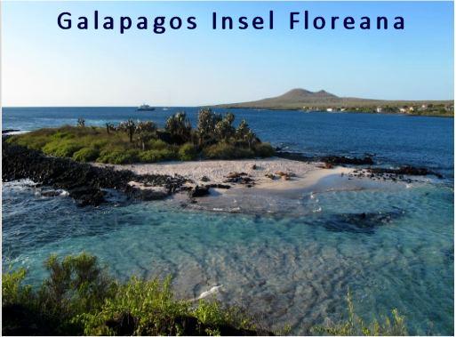 Insel Florena Galapagos