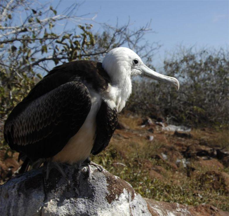 Albatros Galapagos Reise