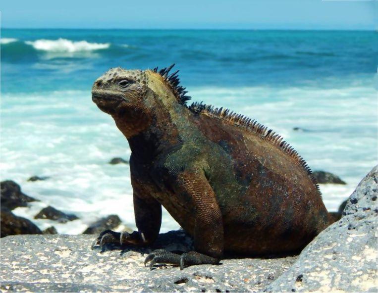 Galapagos Meeresechse