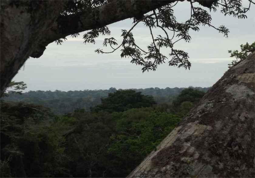 Manu Peru Regenwald