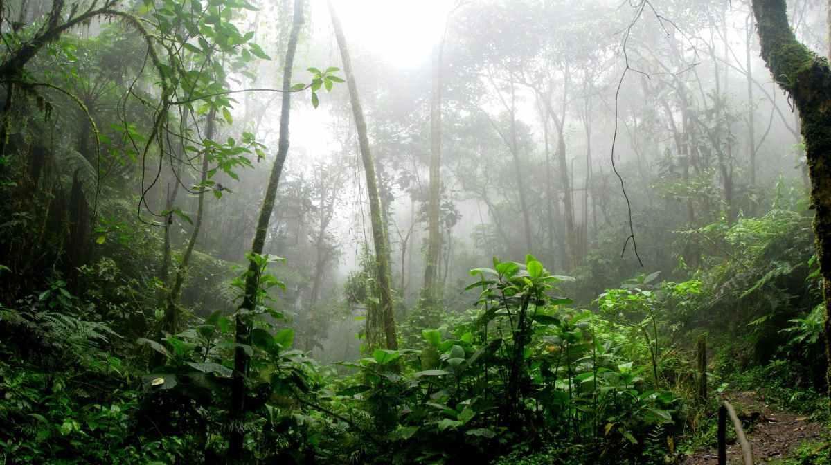 YACUMA ECOLODGE – Ecuador  4 Tage / 3 Nächte – Regenwaldtour ab Quito /Tena.