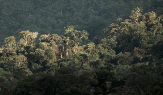 Bergregenwald Amazonas