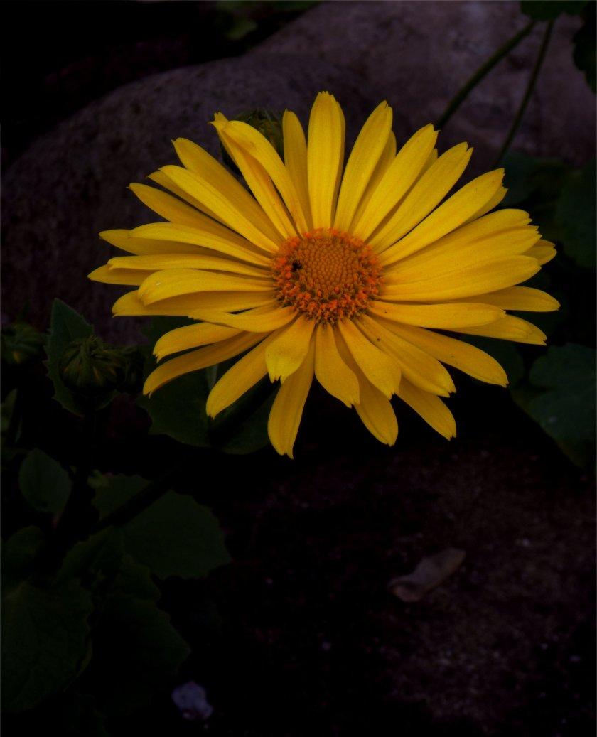 Frühlingsblüte_3