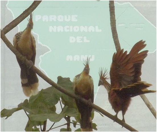 Manu-Nationalpark_BB
