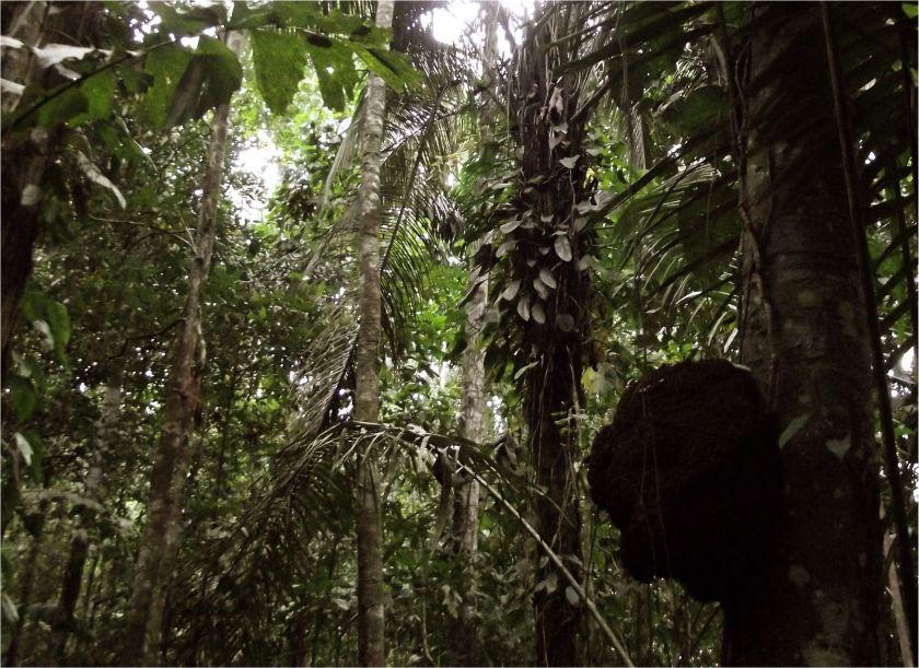 Peru_Regenwald (1)