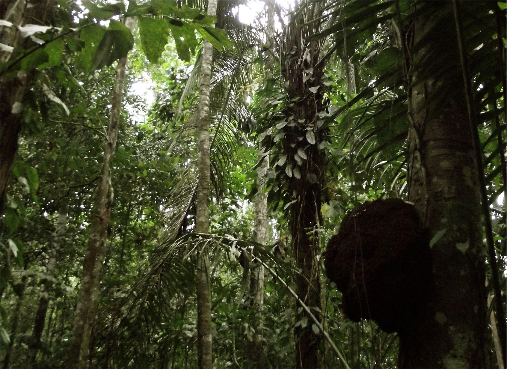 Peru_Regenwald (10)