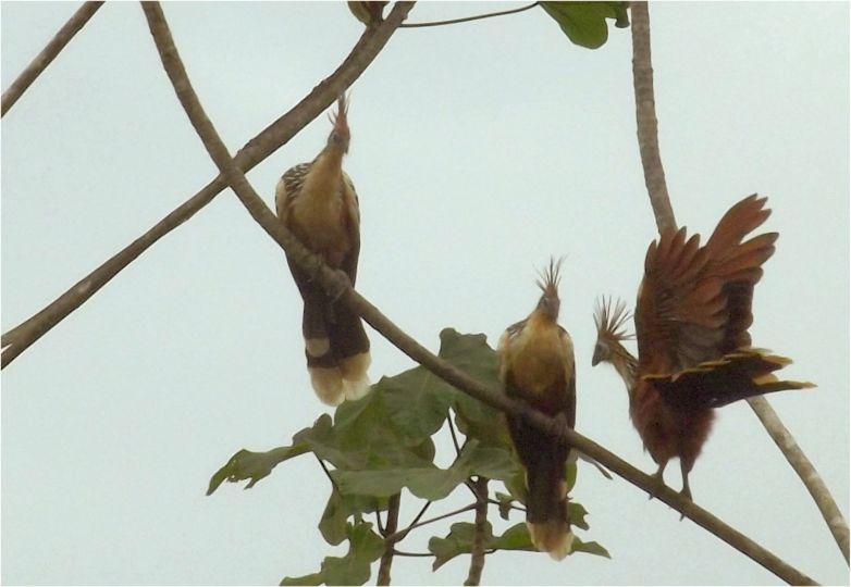 Peru_Regenwald (3)