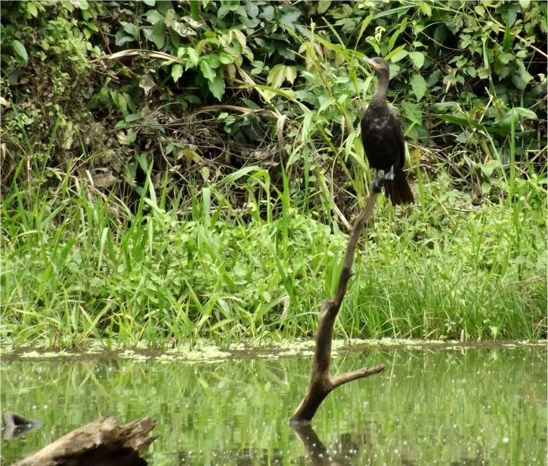 Peru_Regenwald (5)
