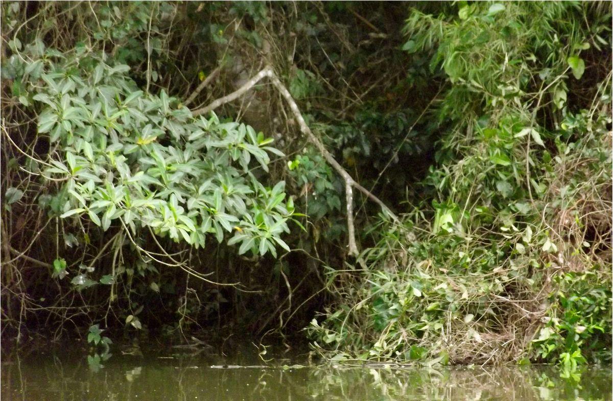 """Erste """"Weltweite Versammlung für das Amazonasgebiet"""".  – Primera Asamblea Mundial por laAmazonía"""