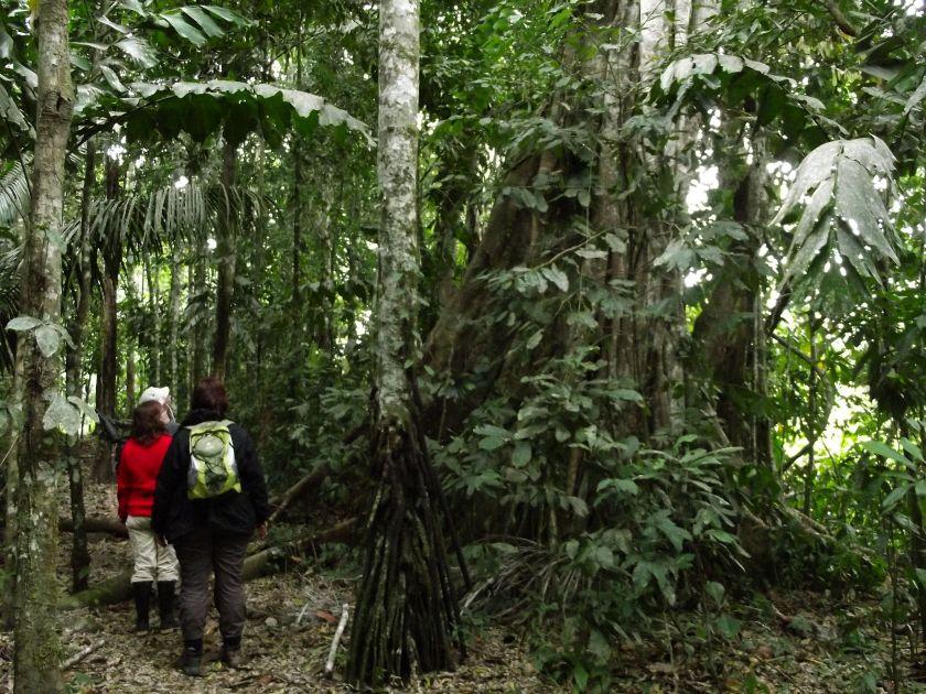 Peru_Regenwald (9)