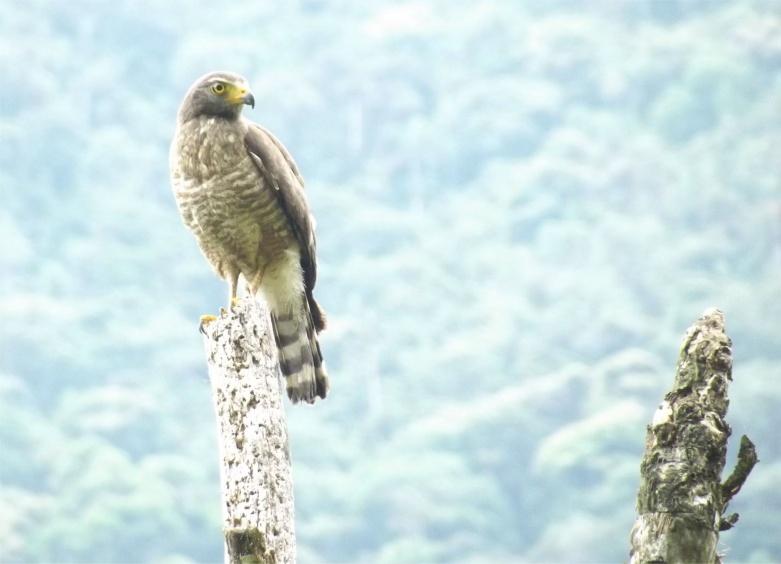 Fotos von Greifvögeln aus Südamerika.