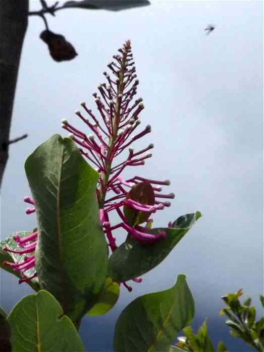 Peru Regenwald Blüte