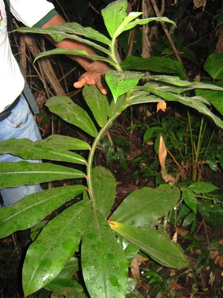 Junger Baum im Regenwald